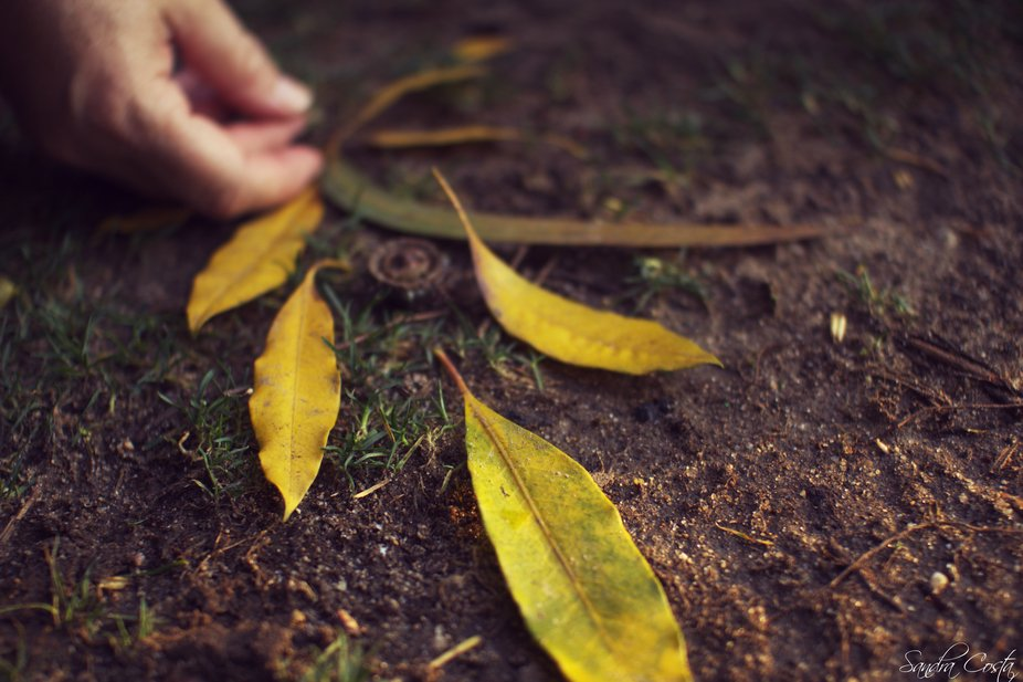 Composition of leafs on grass and soil