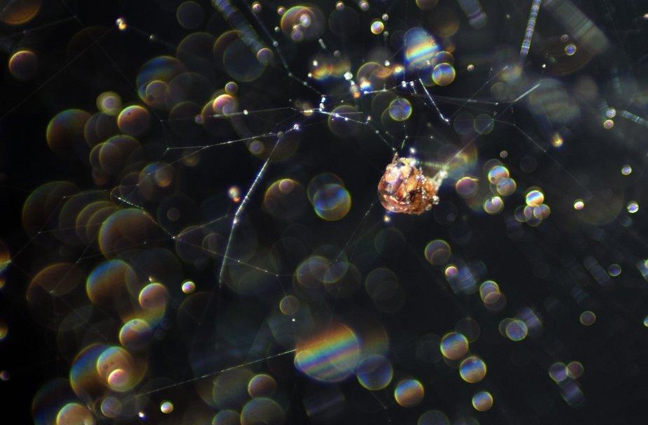 A spider dream