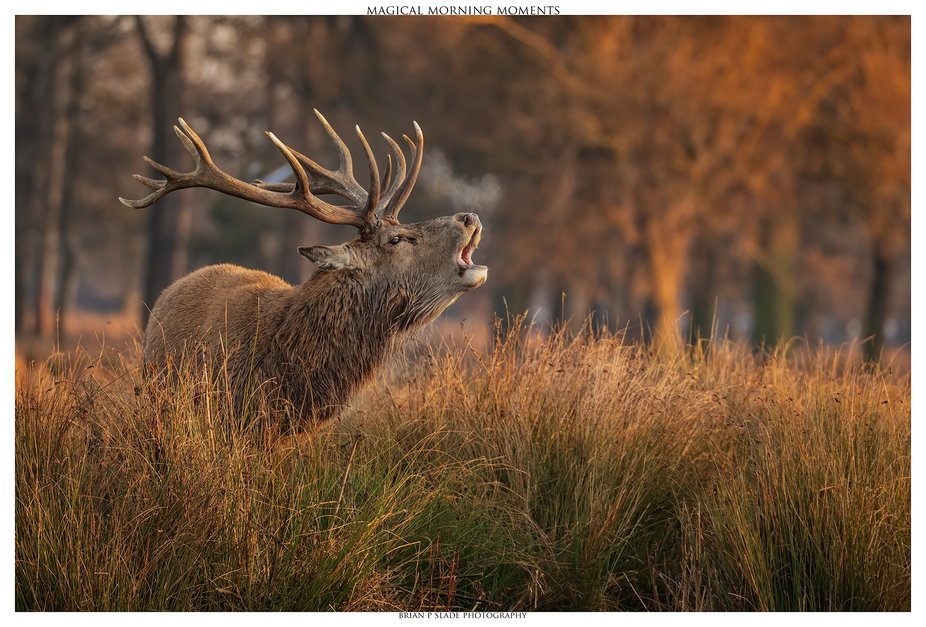 Magical Morning Moments - Without doubt, the light produced by a beautiful morning sunrise or the...