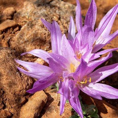 a single purple flower in bloom covered in rain drops in Marbella, Spain