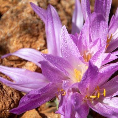 a single purple flower in bloom covered in rain drops in Marbella