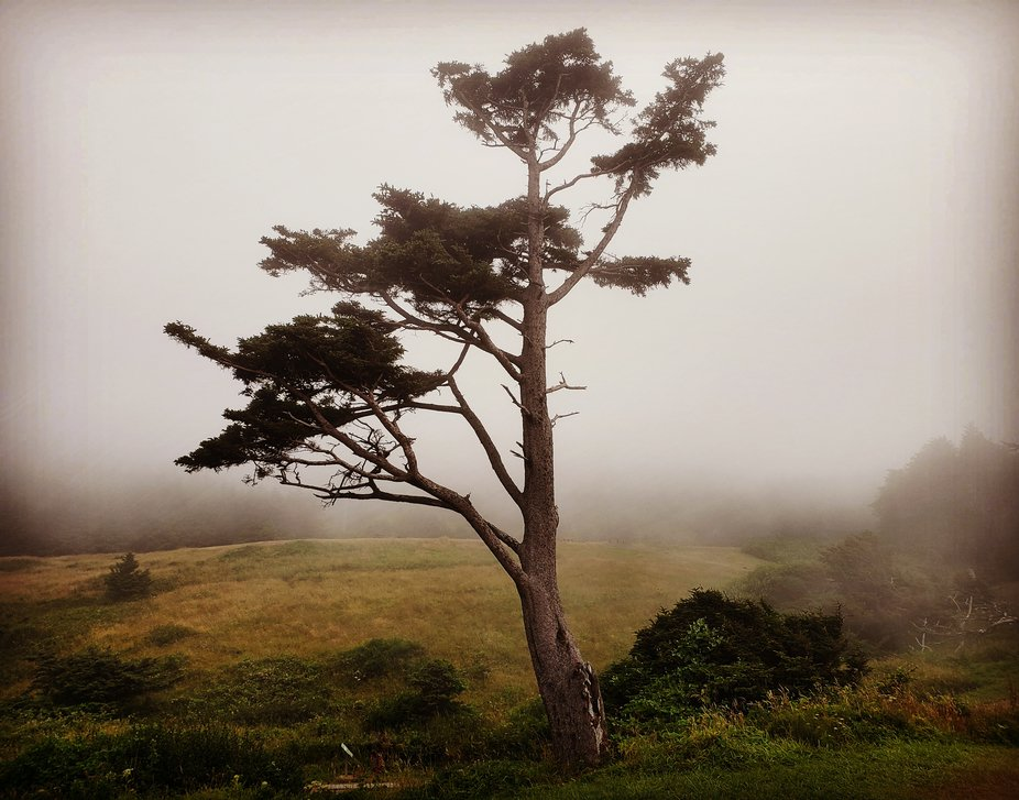 I've been taking photos of this one tree on the Oregon coast for years and years.