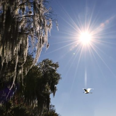 Sunshine on the Spanish Moss NW