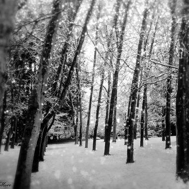 Lithia in Winter BW