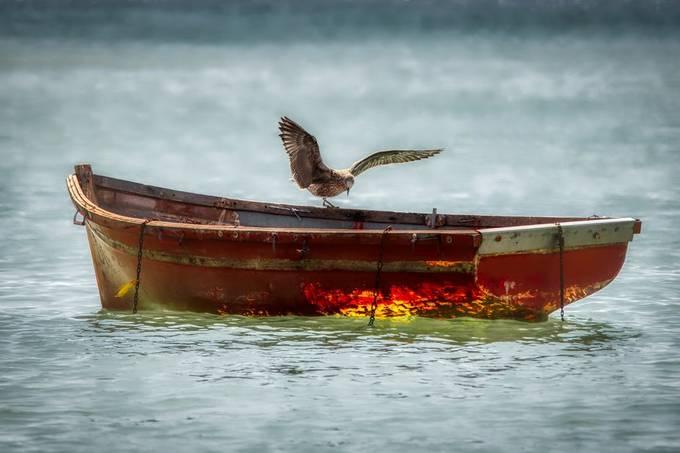 Gull on Boat