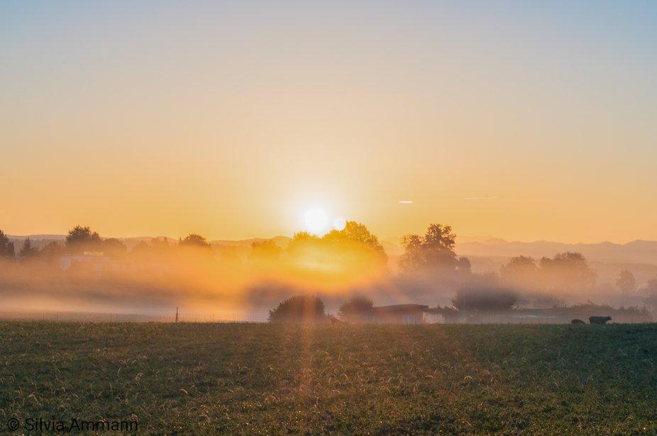As the fog turned into a golden fleece