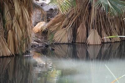 Desert Oasis Coachella Valley Wildlife Preserve