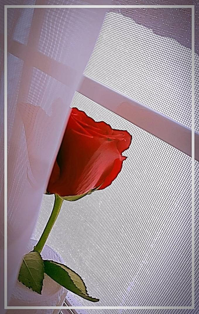 A single frame, like a window, captures so much beauty.