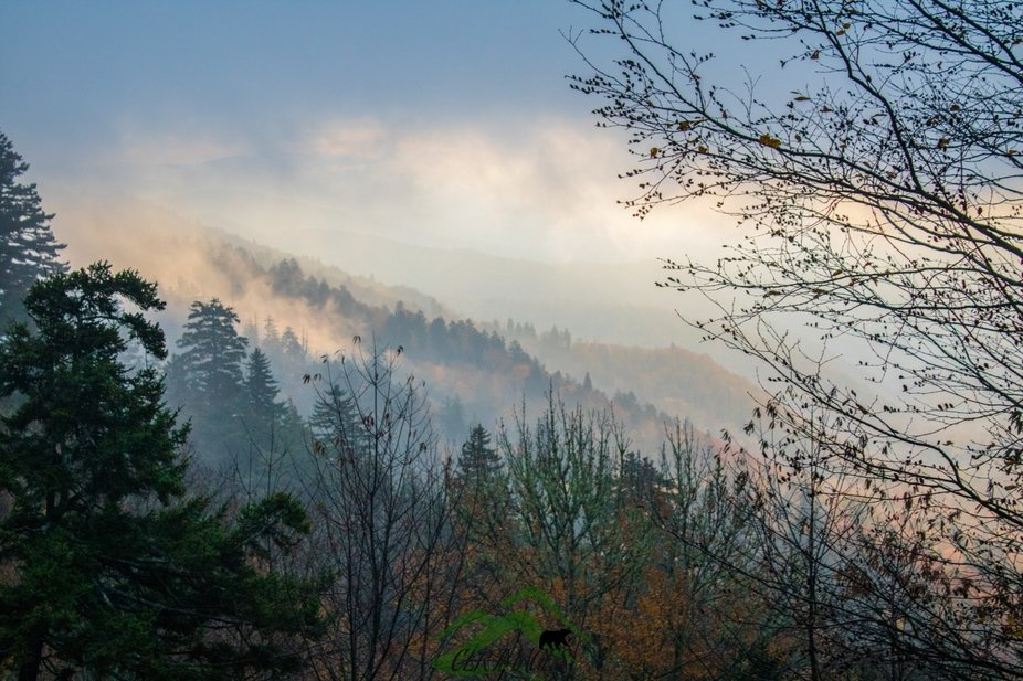 Foggy sunrise from Clingmans Dome Road, Great Smoky Mountains National Park.