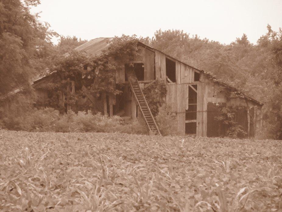 Old barn at abandoned homestead