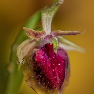 orchids2019