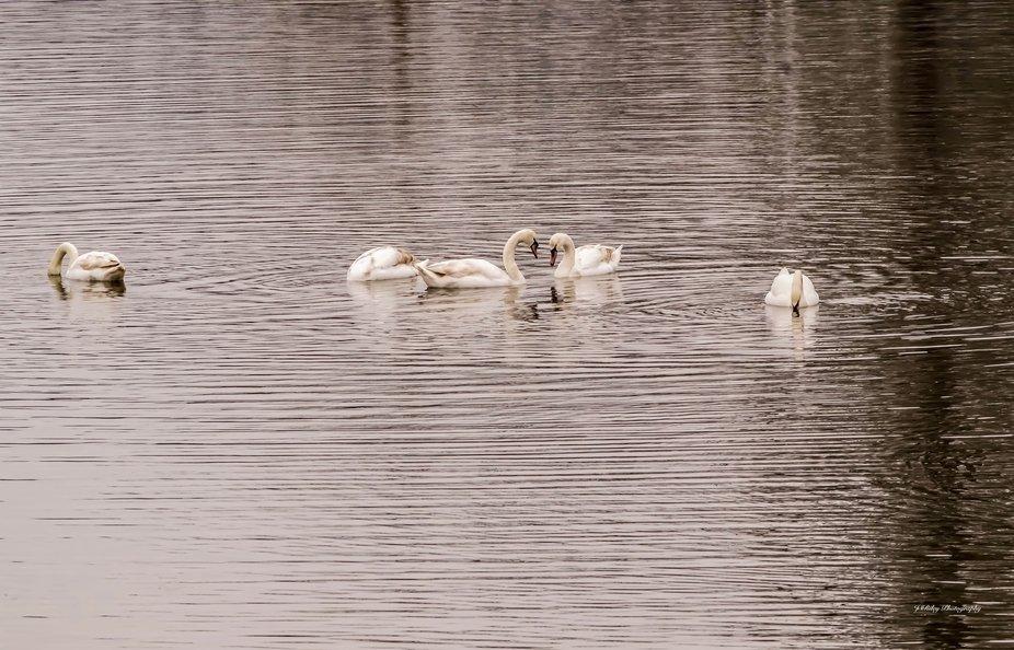 On Kinderhook Lake