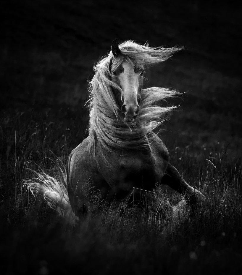 Chaliste by katarzynaokrzesik - Animals In Monochrome Photo Contest