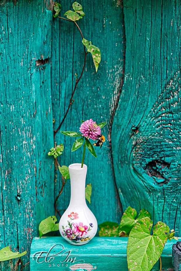 A Vase and a Fence