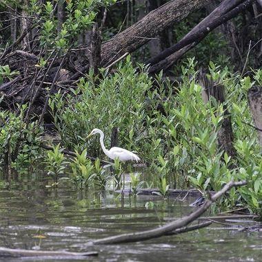 Daintree River Wetlands (1)