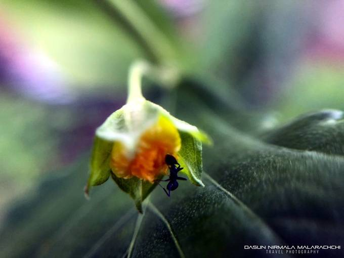 Ant and the flower