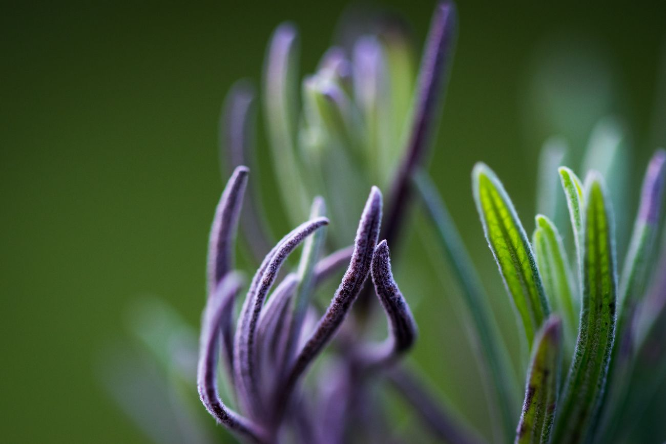 Bit of lavender