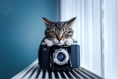 The Cutest Catographer