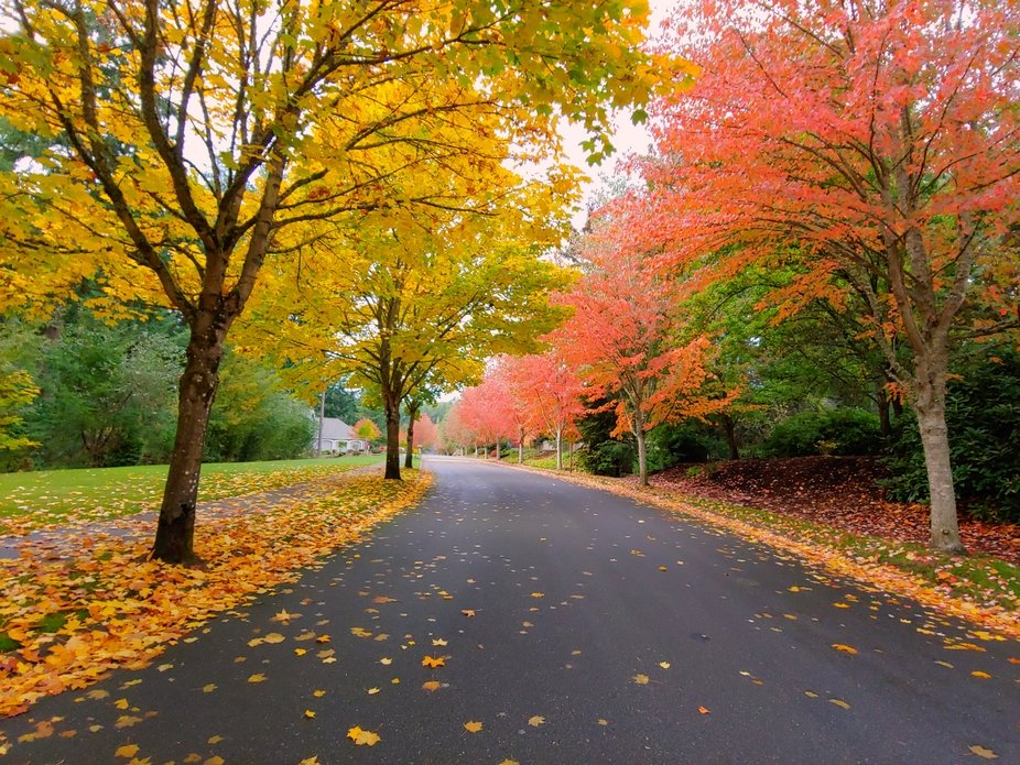 Beautiful Fall colors in Washington State, breathtaking!!