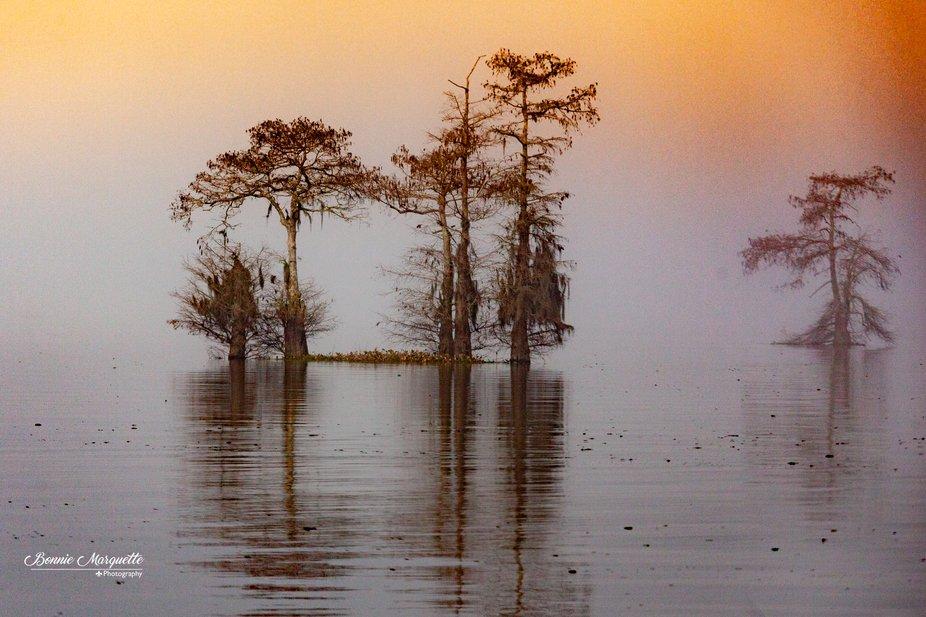 Henderson Swamp