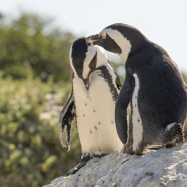 Boulder Penguin Park South Africa