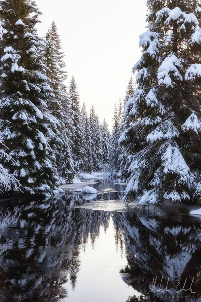 A winter Forest Stream