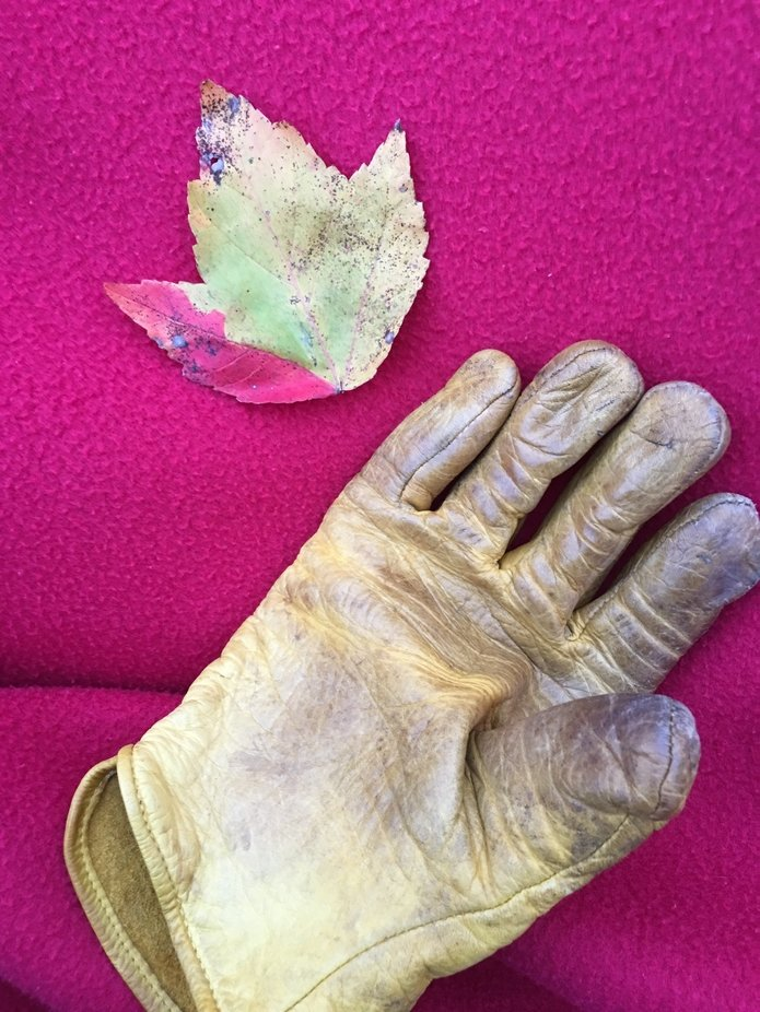 I've raked many a leaf with this glove.