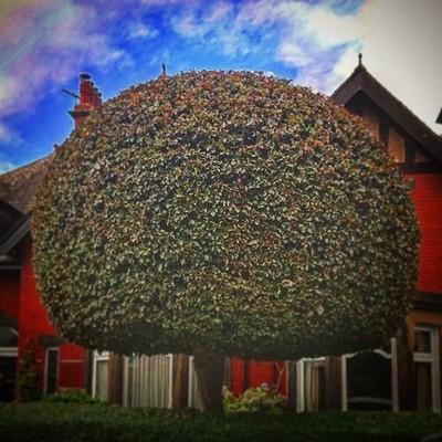 #symetrical #tree #nature #green #redbrickMy dream tree!!!