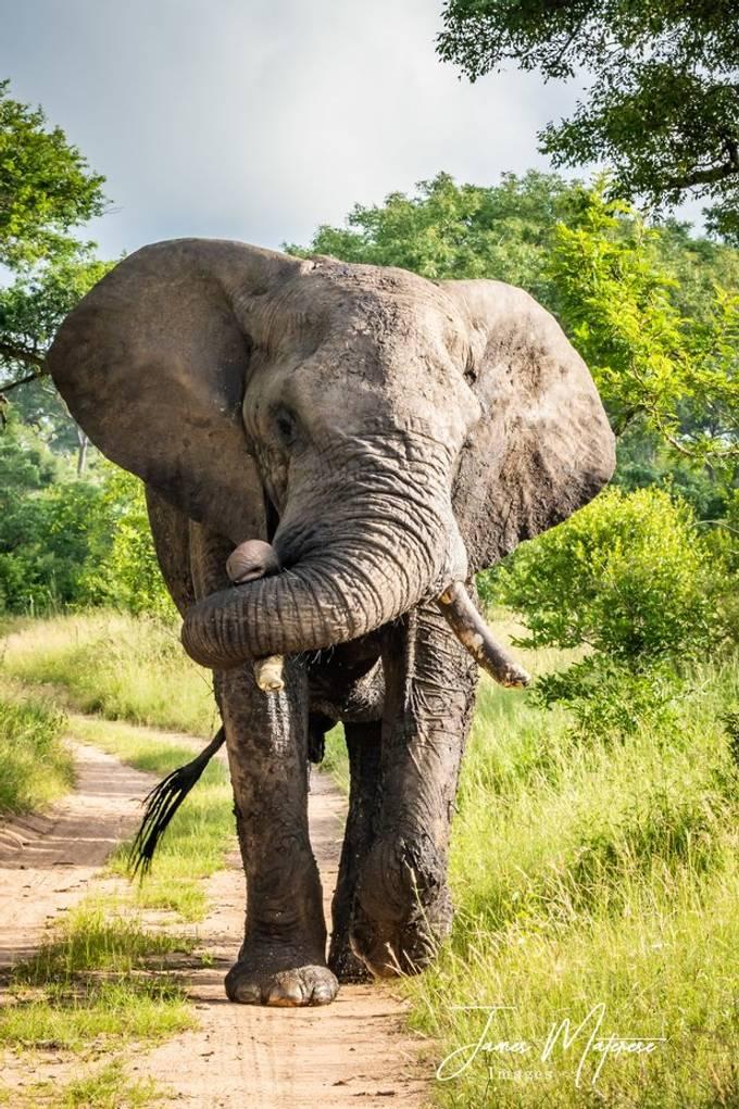 Elephant 2020