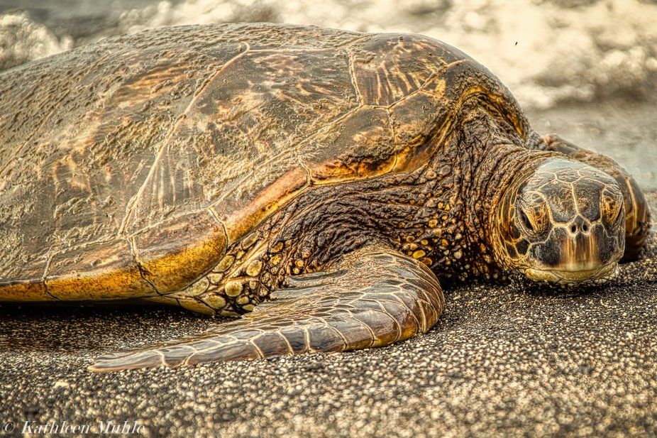 On the Big Island the Kaloko-Honokohau National Historical Park has a wonderful sandy beach which...