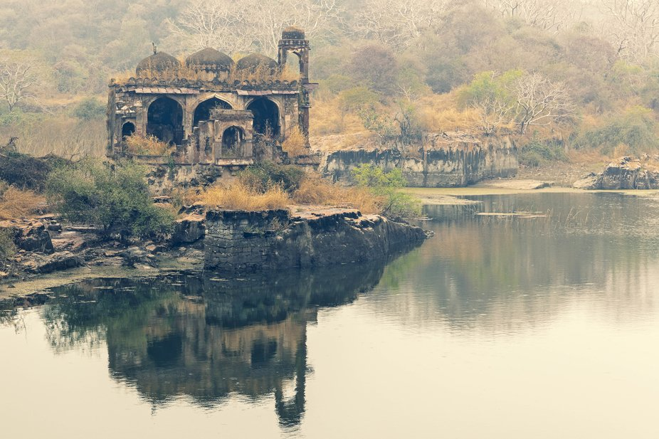 A natural lake inside the 1000 year old Ranthambhor Fort in Rajasthan India, was the bathing pool...