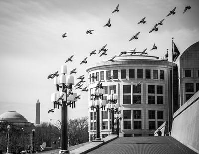 Birds in DC