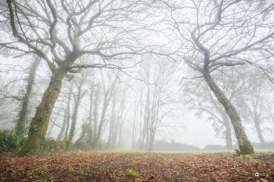 These two trees and the mist created such a ethereal scene. It looked like a portal to another di...