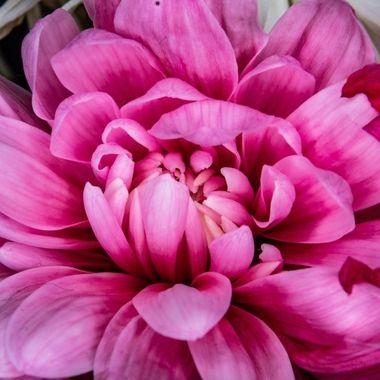 flower-5339