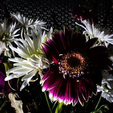 flower scu-5318