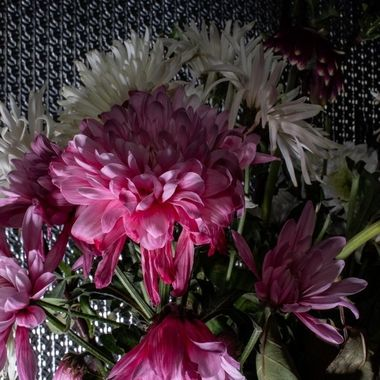 flower-5320