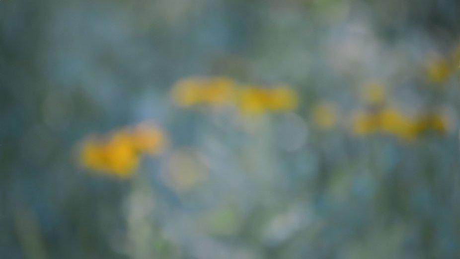 Intentional Camera Movement, Backyard Garden