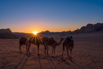 Camel's Sunset