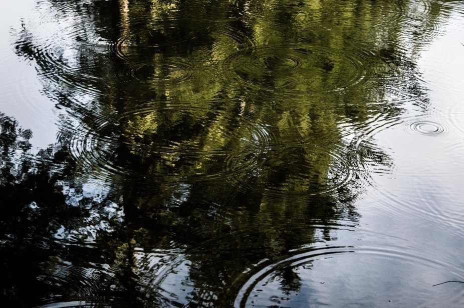 The shower has passed, the sun is out, but the trees still drip big drops into the pond creating ...