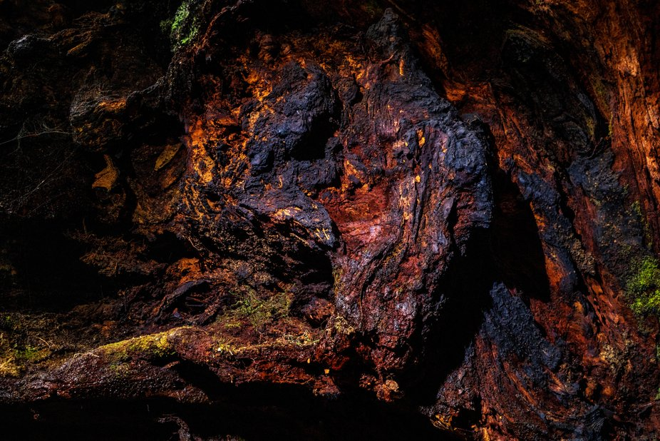 One of a series of works from the Sequoia Obscura series detailing the colorful inner harbor of l...