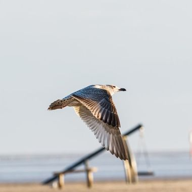 Captured this seagull in late afternoon sun.
