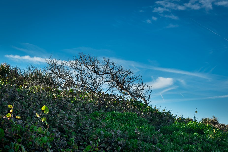 Though the sun was shining, the sky was blue, and the landscape green, bare branches on a nearby ...