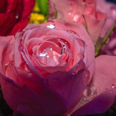 rose mel-5984