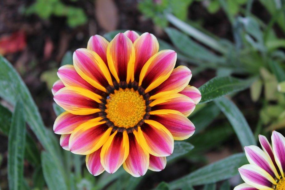 Pinwheels of Flower Colors