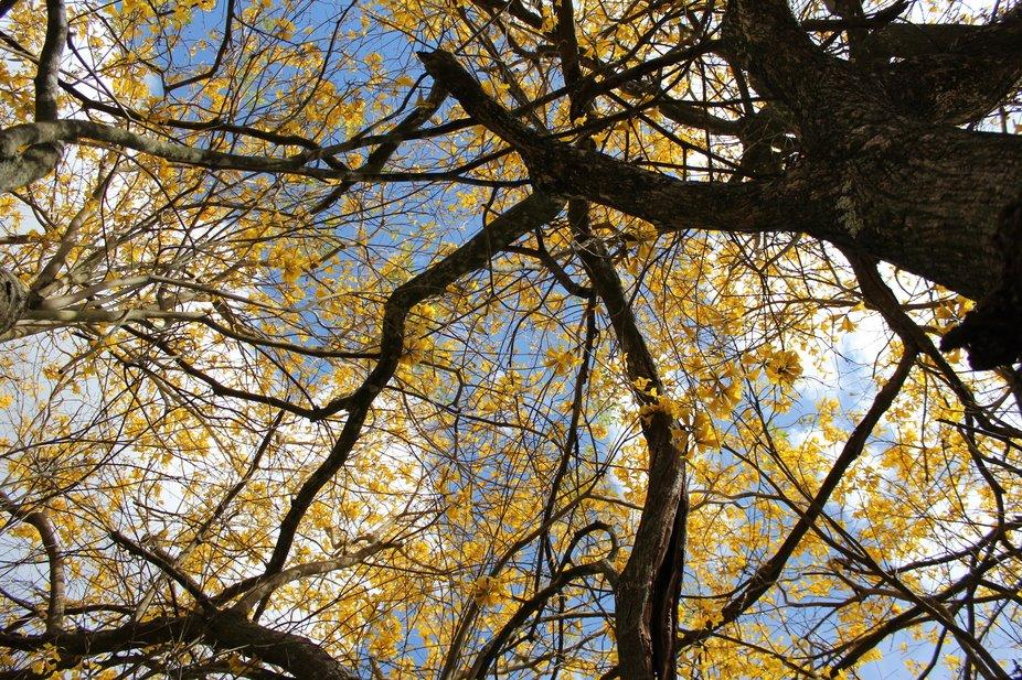 Yellow Tree Line
