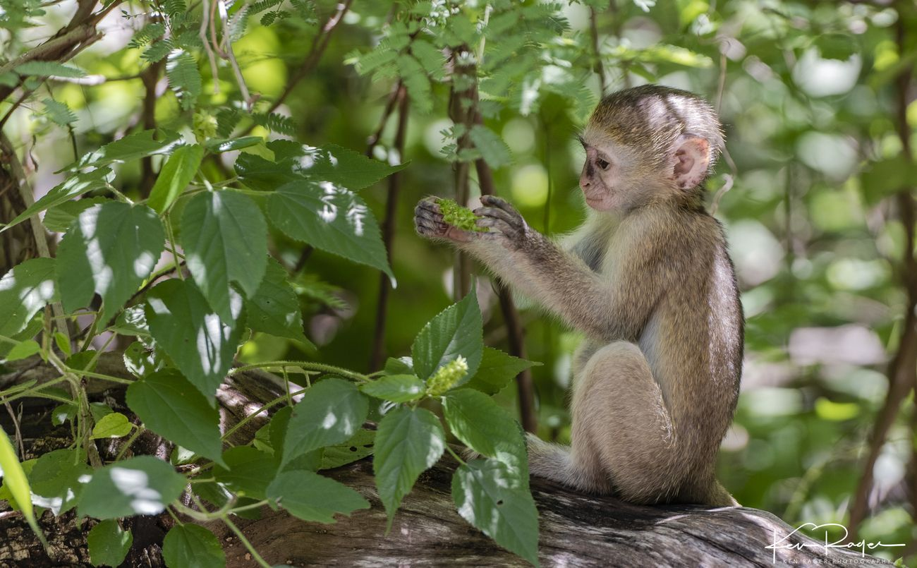 Monkey Business (1 of 7)