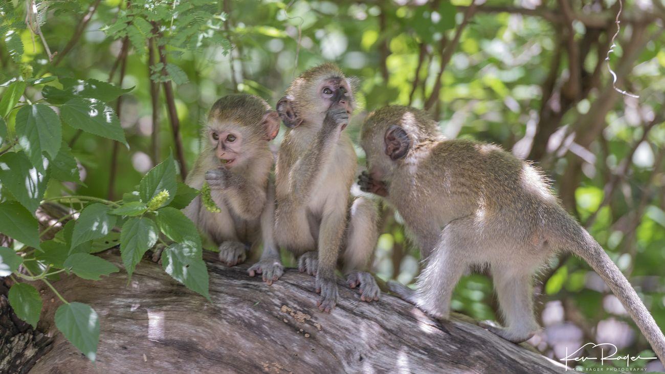 Monkey Business (4 of 7)