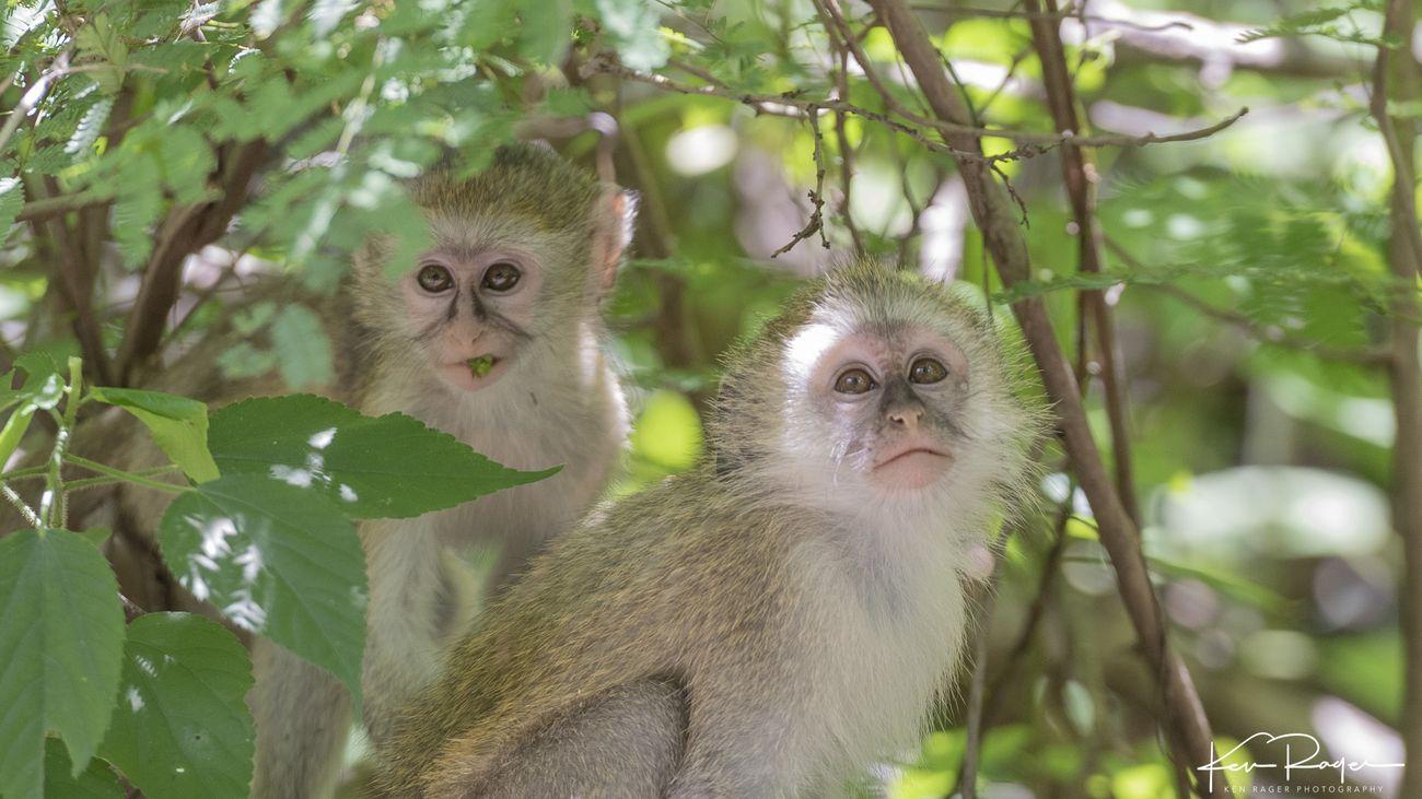 Monkey Business (5 of 7)