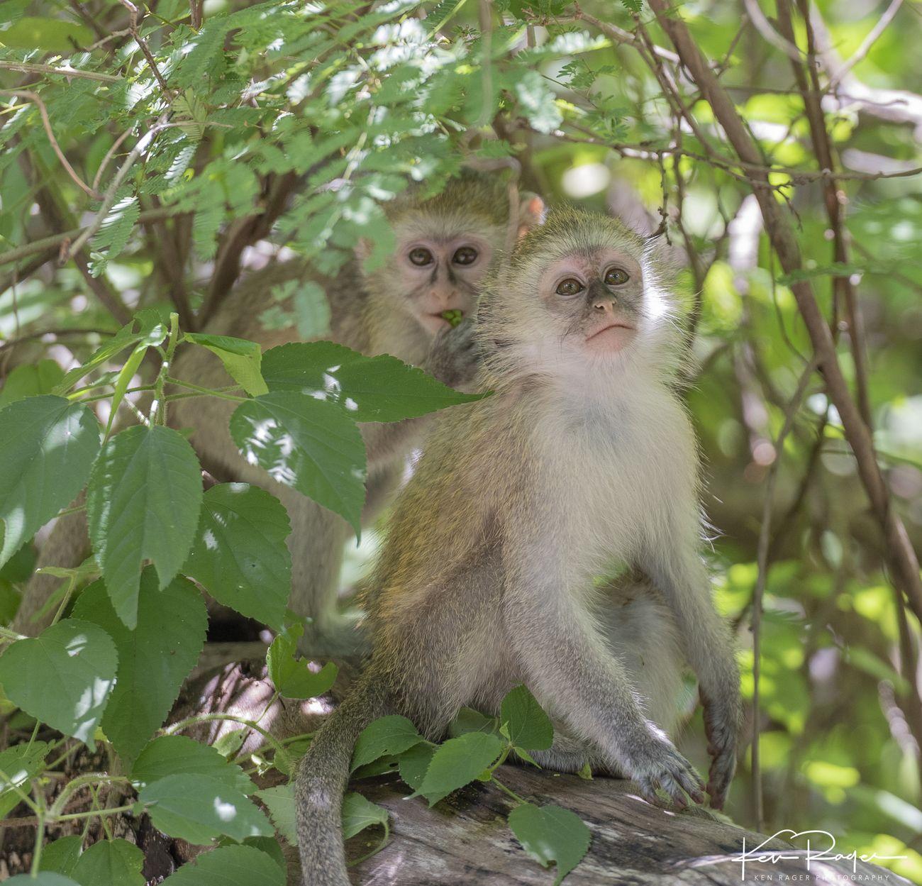 Monkey Business (6 of 7)