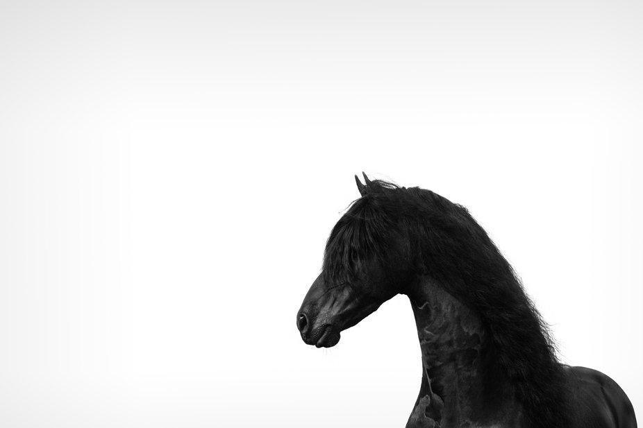 Black_horse_ScreenSharpened-5